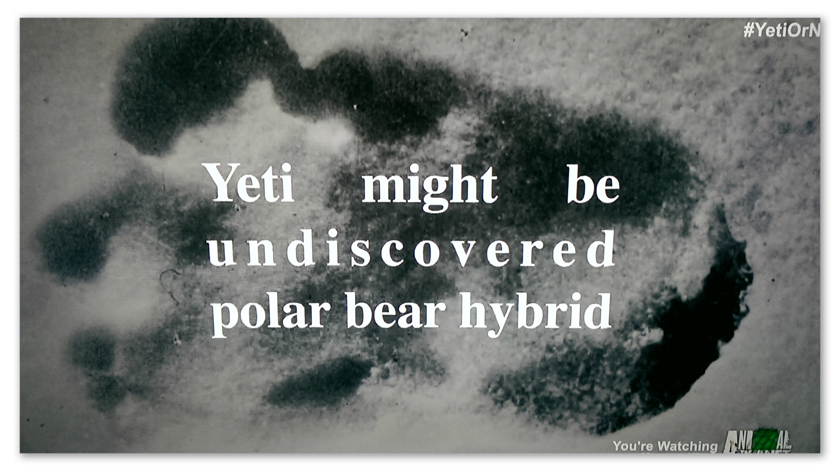 """Image of a footprint with text """"Yeti might be undiscovered polar bear hybrid"""""""