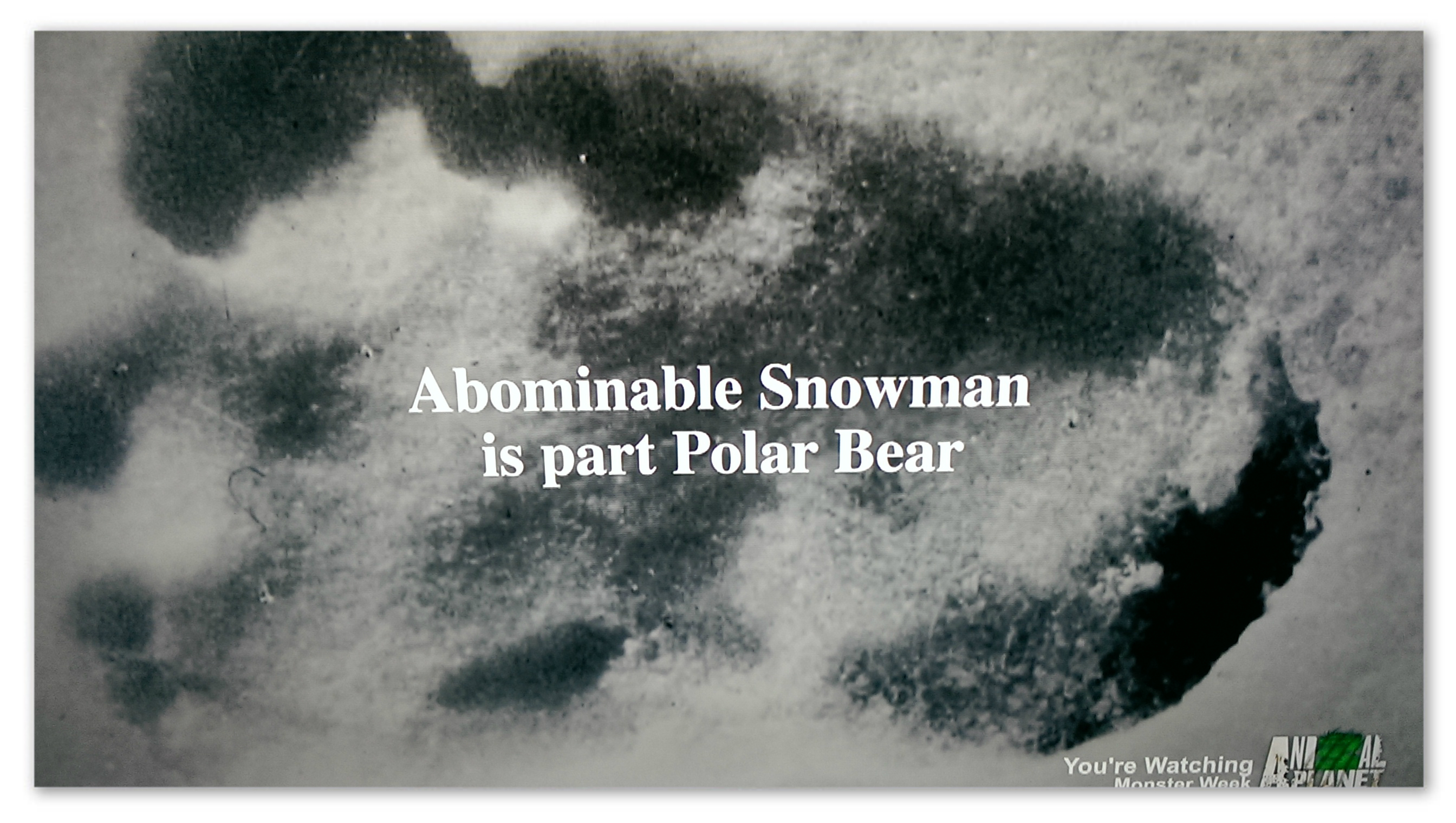 """Image of a footprint with text """"Abominable snowman is part polar bear"""""""