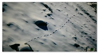 Oh yeah, that's some good proof. What looked like human footprints in the distance... okay.