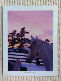 Snowy Equine Portraiture