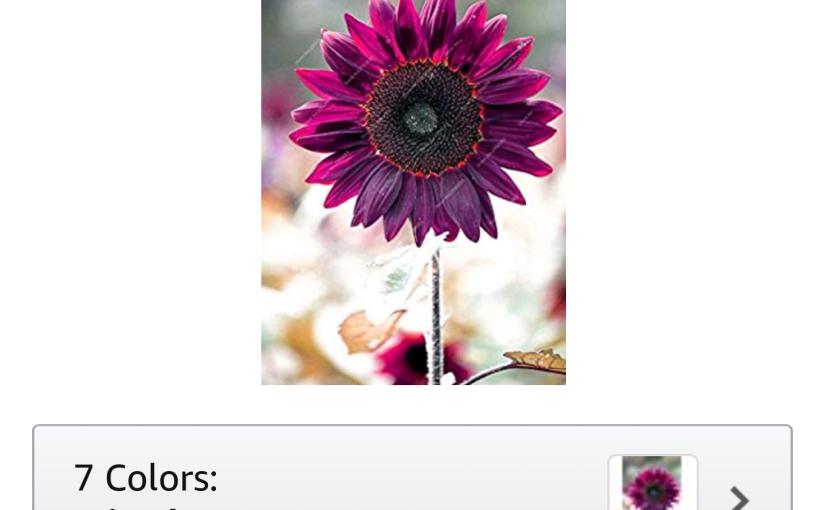 Purple Sunflower Seed Scam on the Amazon dot Com