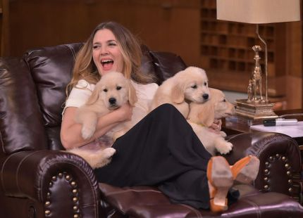 Drew Barrymore with puppies