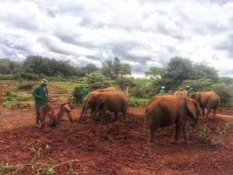 IMG 20150507 WA0011 01 - Een plog over Kenya, adoptie en olifanten.