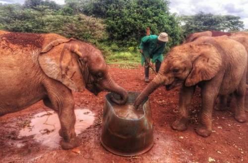 IMG 20150507 WA0015 01 - Een plog over Kenya, adoptie en olifanten.