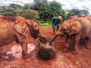 olifanten kenya