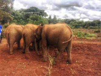 IMG 20150507 WA0020 01 - Een plog over Kenya, adoptie en olifanten.