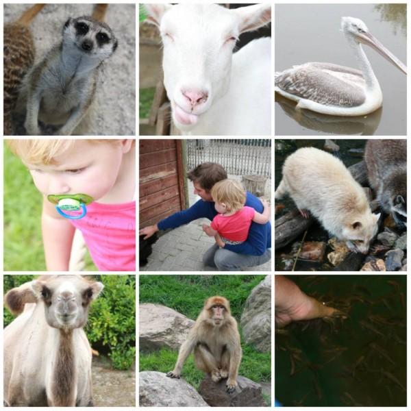 collagdierenrijke