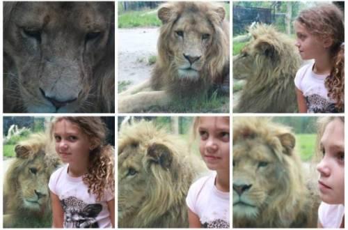leeuw - Sesamstraat in het Dierenrijk!