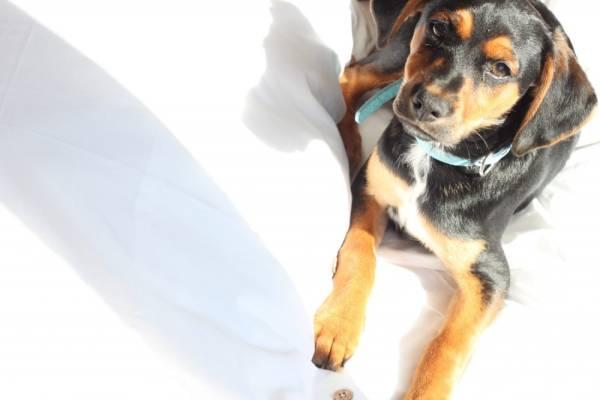 Tips voor de nieuwe pup in huis