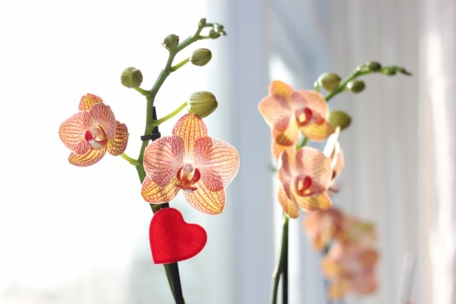 IMG 0303 - Valentijnsdag | Zeg het met bloemen!