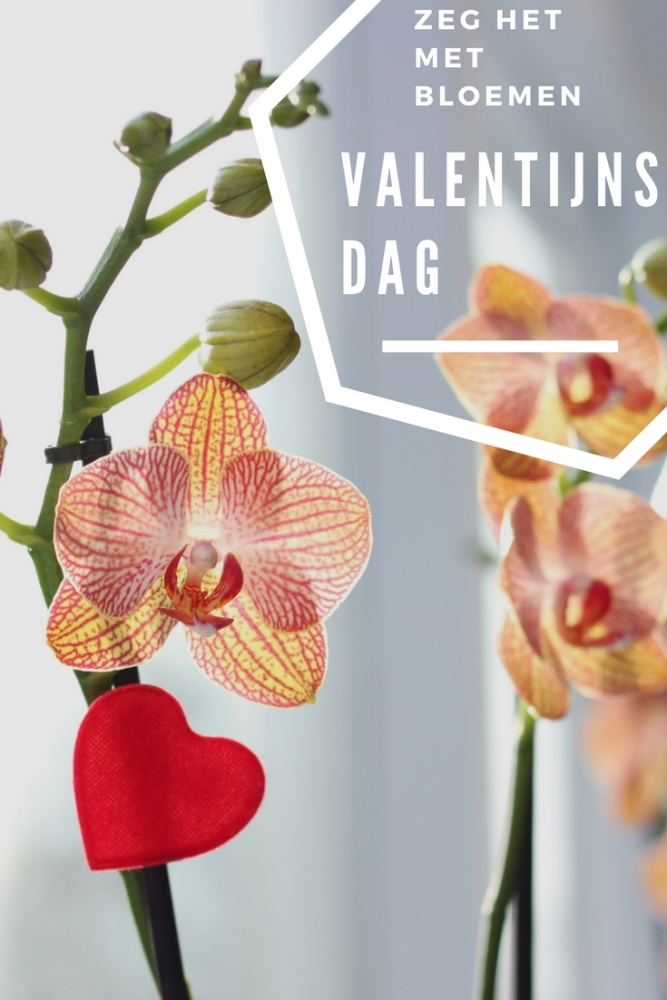 valentijnsdagbloemen - Valentijnsdag | Zeg het met bloemen!