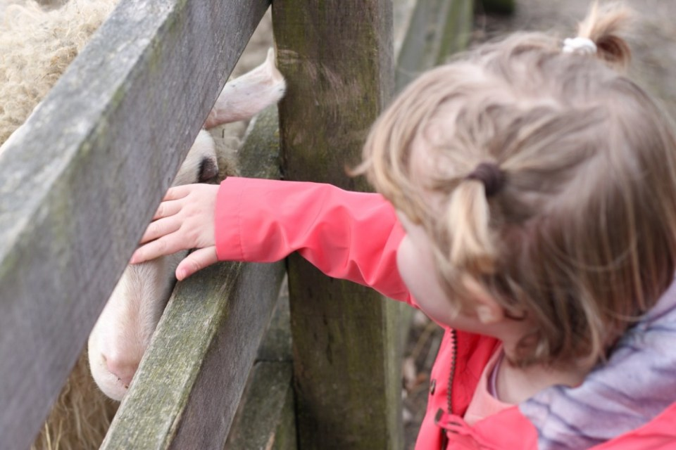 IMG 7984 - #OOTD   The Harbour Kids   Lammetjes aaien op de hei