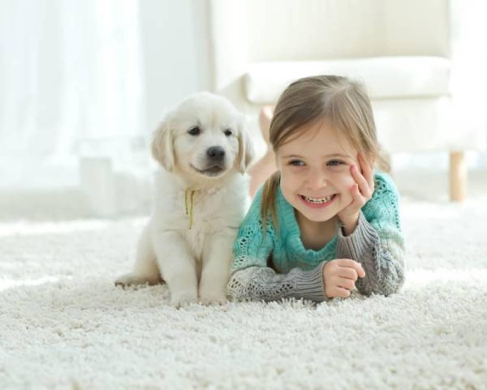shutterstock 405492349 - Hoe kies je het beste vloerkleed voor thuis ?