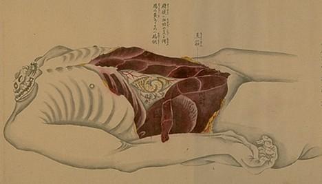 Japanese Anatomical Drawings Sapien Games