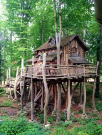 25+ Amazingly Cool Tree Houses