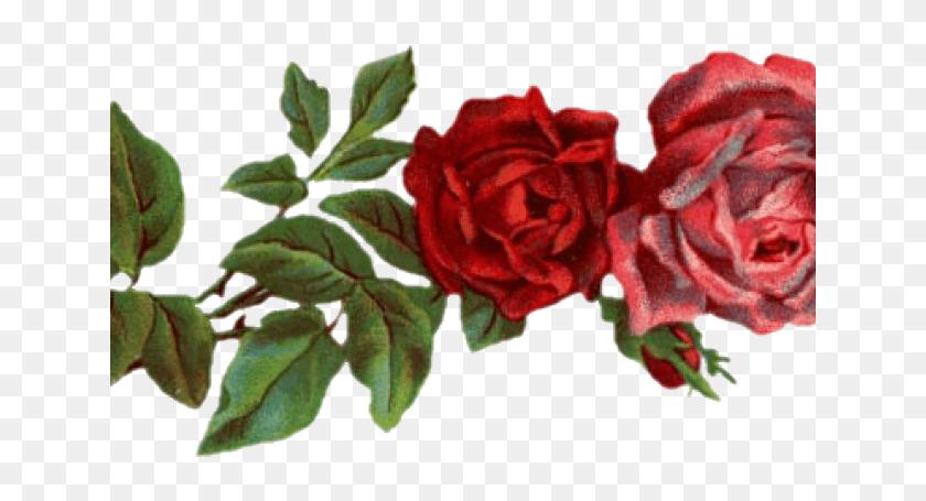 drawn red rose tumblr