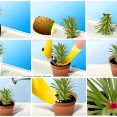 DIY Plantar hojas de una Piña