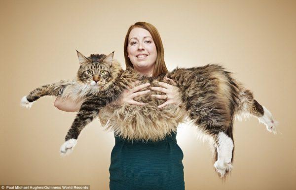 gato-record