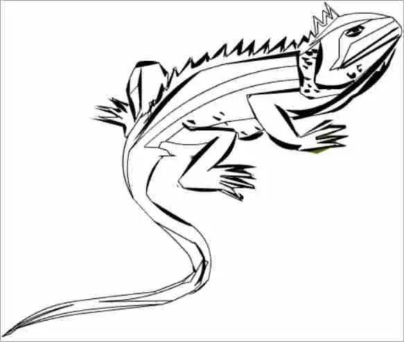Dibujo Iguana Colorear
