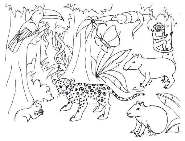 Dibujos De La Selva Para Colorear. Simple Leon. Top Mapa