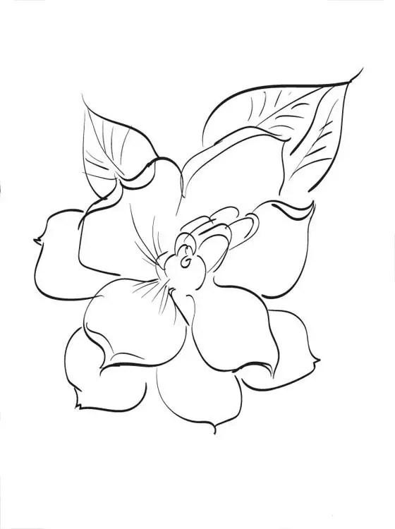 Disegnare Fiore