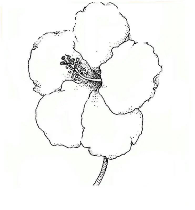 Flor cayena para colorear, pintar e imprimir