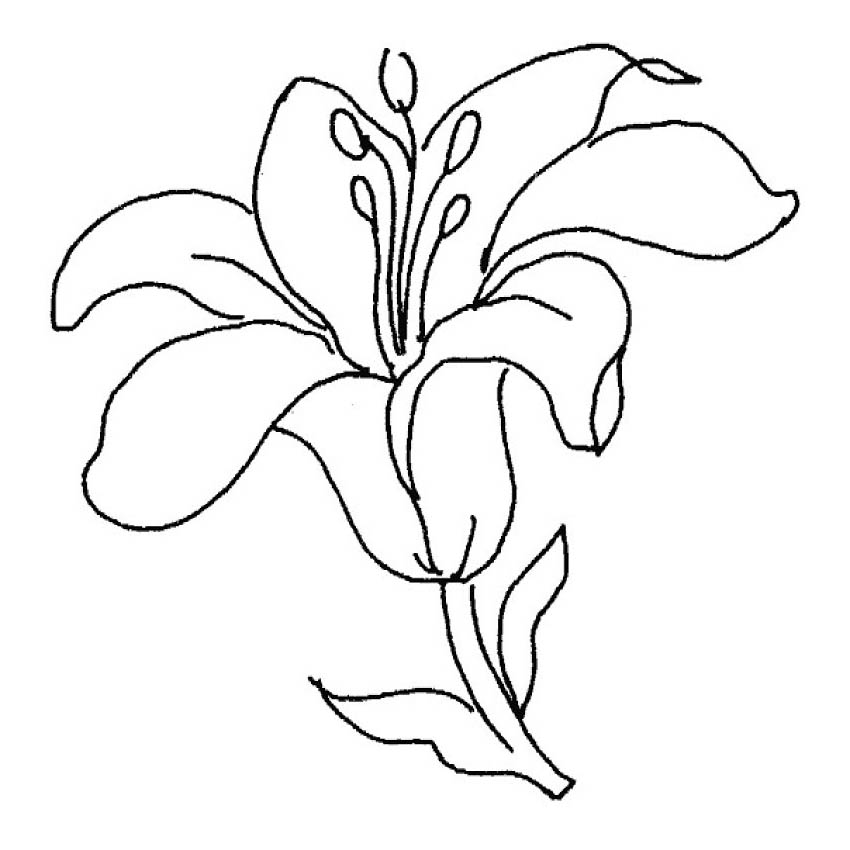 Dibujos Naturales De Flores Lapiz