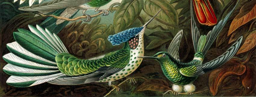 Obras de arte de la Naturaleza de Ernst Haeckel  Pintura