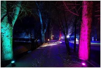Magiczny las rozświetli Poznań