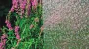 cny-Flora-lite