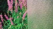cny-Wavedrop