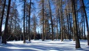 Lärchenwiese im Winter