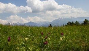 Naturpark Trudner Horn-Orchideen