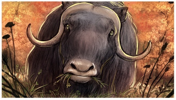 The muskox has personality even in this quiet moment