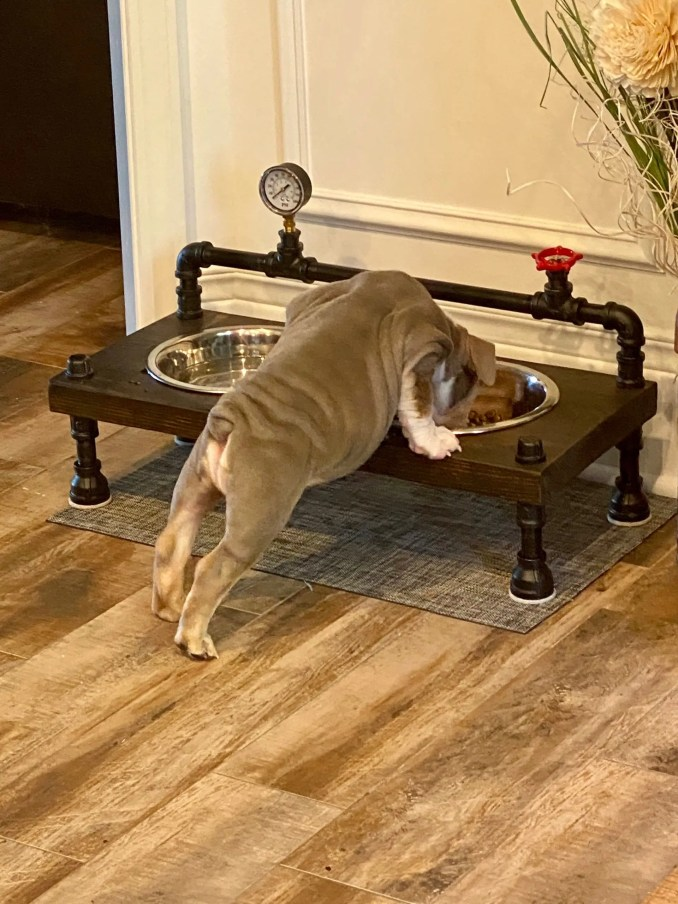 https://i0.wp.com/www.pipeworkpieces.com/wp-content/uploads/2020/10/steampunk-style-unique-raised-dog-bowl-feeder-cool-dog-feeder-free-personalization-included-new-lower-prices-5f7b91bf-scaled.jpg?w=678&ssl=1
