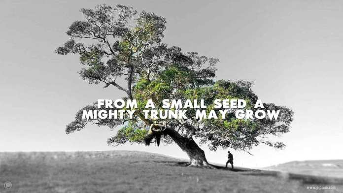 From-a-small-seed-a-mighty-trunk-may-grow-inspirational-quote