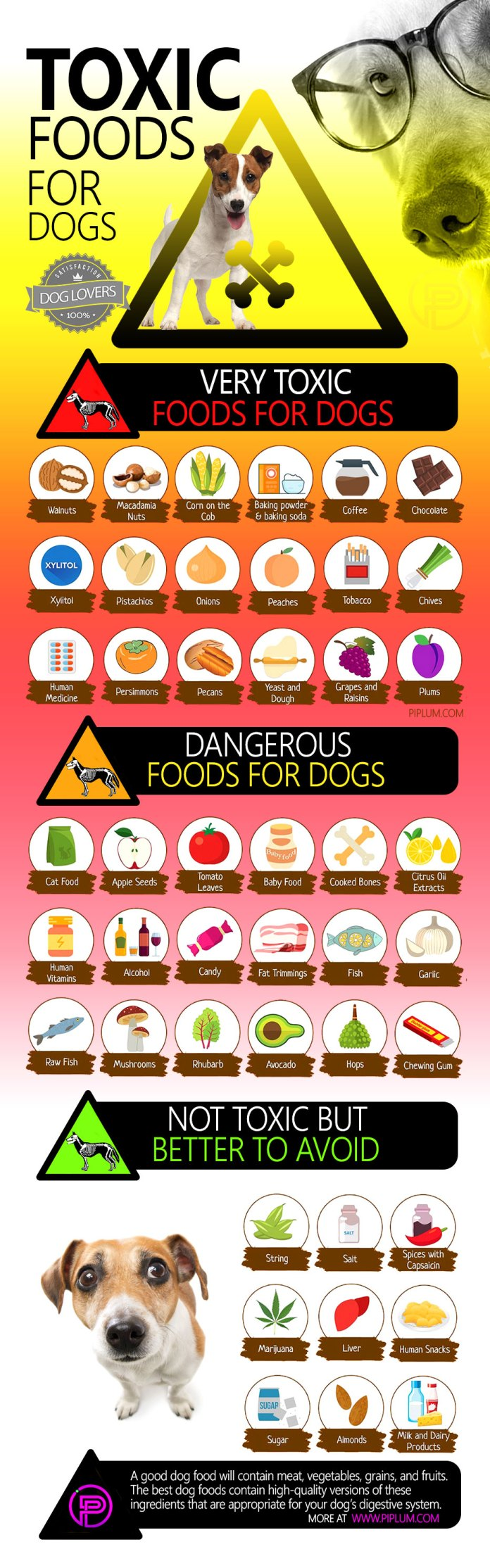 What-food-is-toxic-for-dogs-poster-infographic