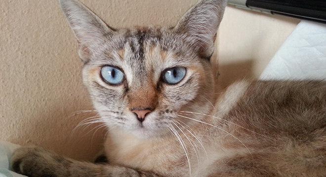 feira adoção gato gatos