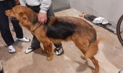 Leitora do PIRANOT busca por dono de cachorro perdido
