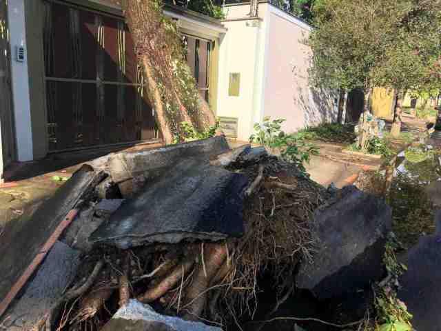 Forte temporal derruba árvore sobre casa no Nova Piracicaba
