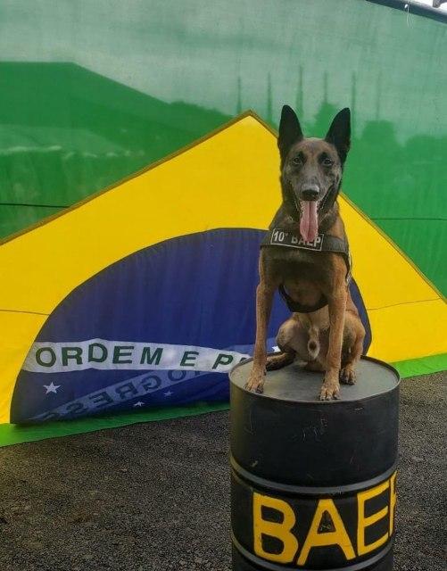 Piracicaba (SP): 10º BAEP anuncia aposentadoria do cão Thor