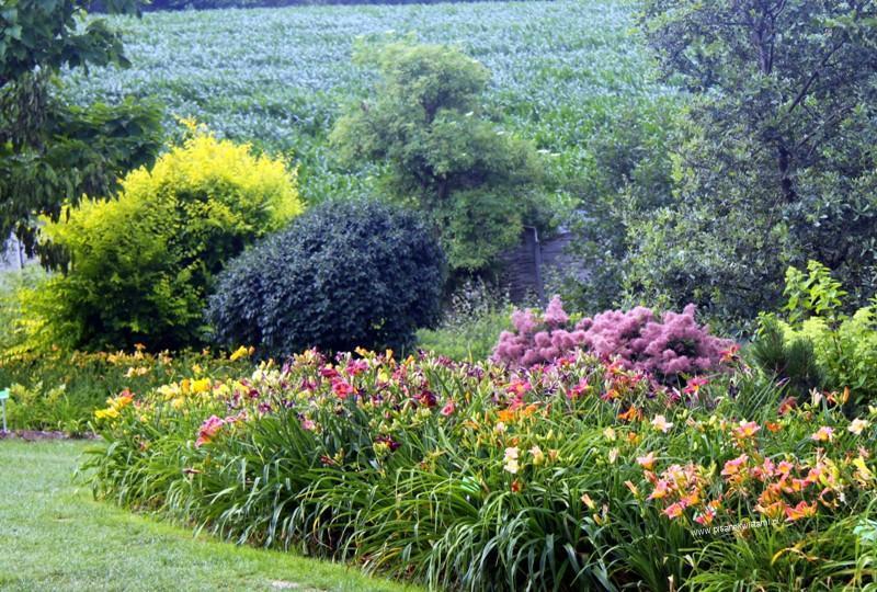 rabata z liliowców w cieniu drzew