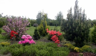Zakładamy ogród leśny