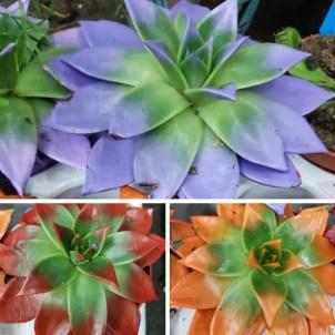Malowane rośliny doniczkowe
