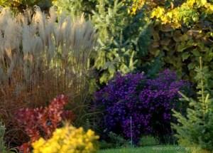 w jesiennym ogrodzie