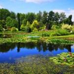 optymalne nawadnianie ogrodu