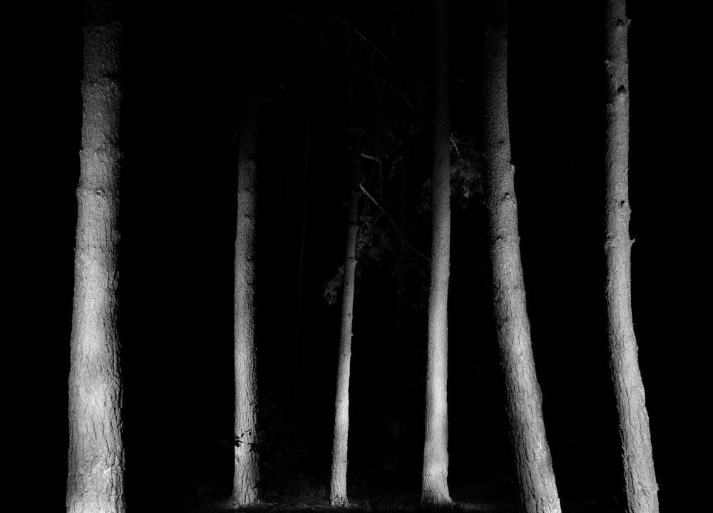 Black forest zdjecia lasu