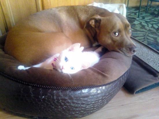 Bronson and Mia