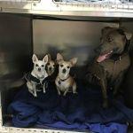 Belle, Mya, and Dobby