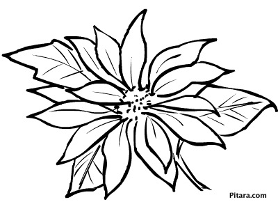 Christmas flowers – Coloring page
